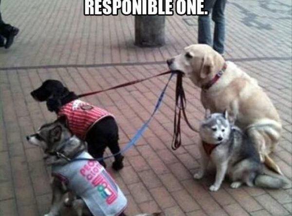 It's Never Easy Being The Responsible One - Dog humor