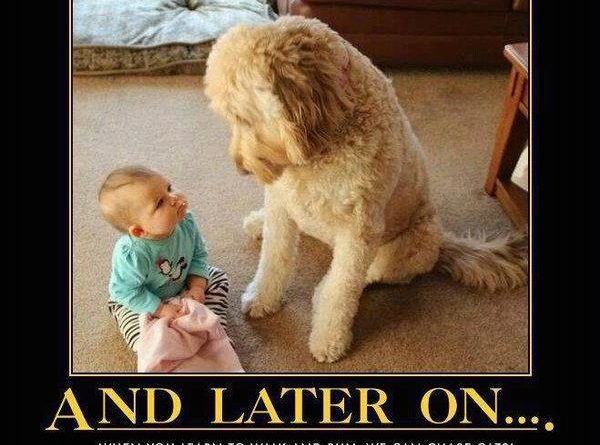 And Later On... - Dog humor