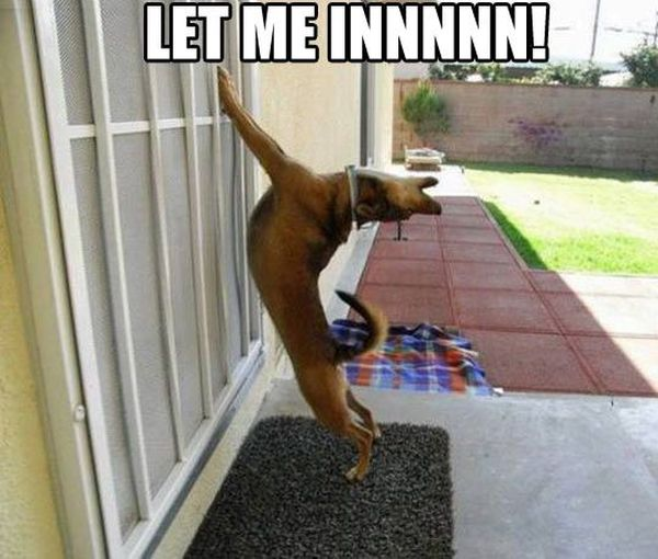 I'm Begging You - Dog humor