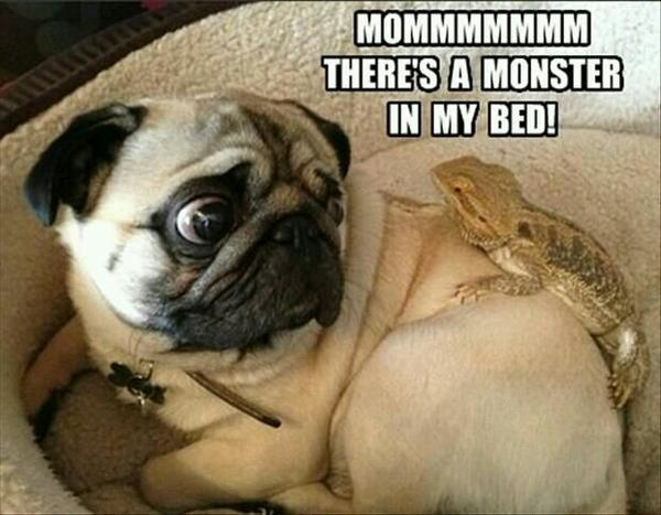 Mommmm! There's A Monster In My Bed! - Dog humor