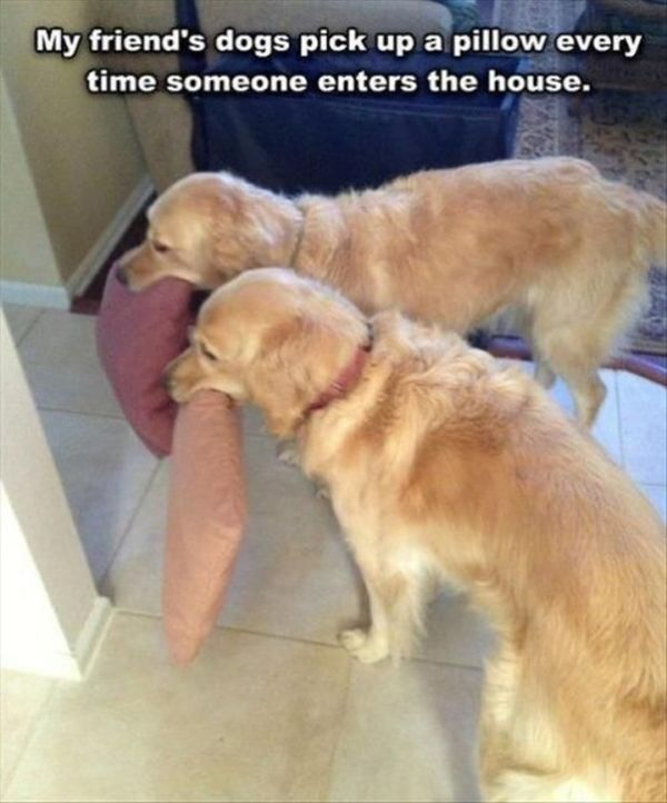 Nice Dogs - Dog humor