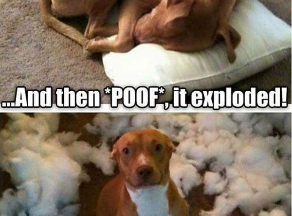 One Minute I Was Sleeping On The Pillow... - Dog humor