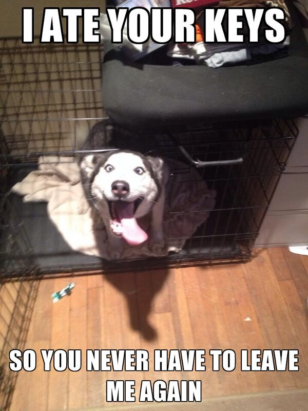 Overly Attached Dog - Dog humor