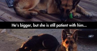 Patience... - Dog humor