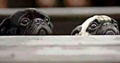 Professional Taste Testers - Dog humor