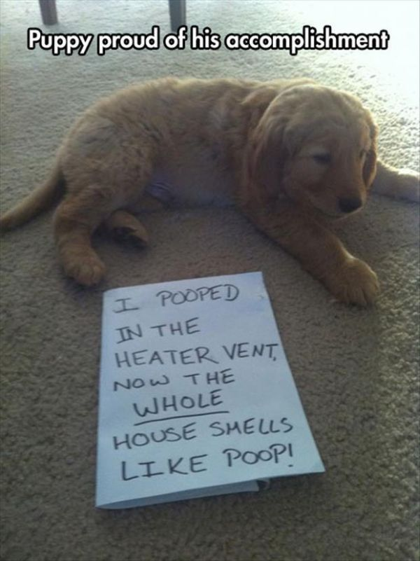 Proud Puppy - Dog humor