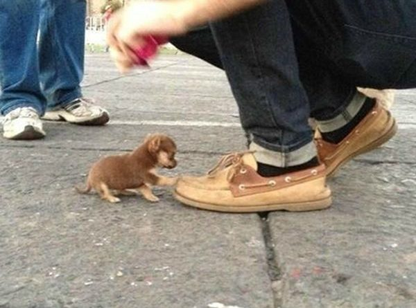 These Shoes! - Dog humor