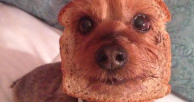 Pure Bread - Dog humor