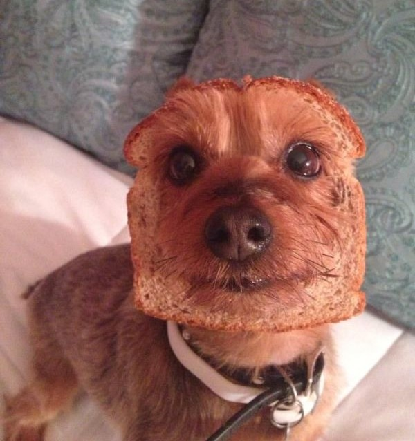 Pure Bread - Dog humor