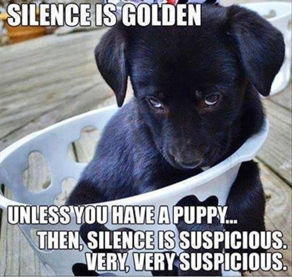 Silence Is Golden Unless You Have A Puppy - Dog humor