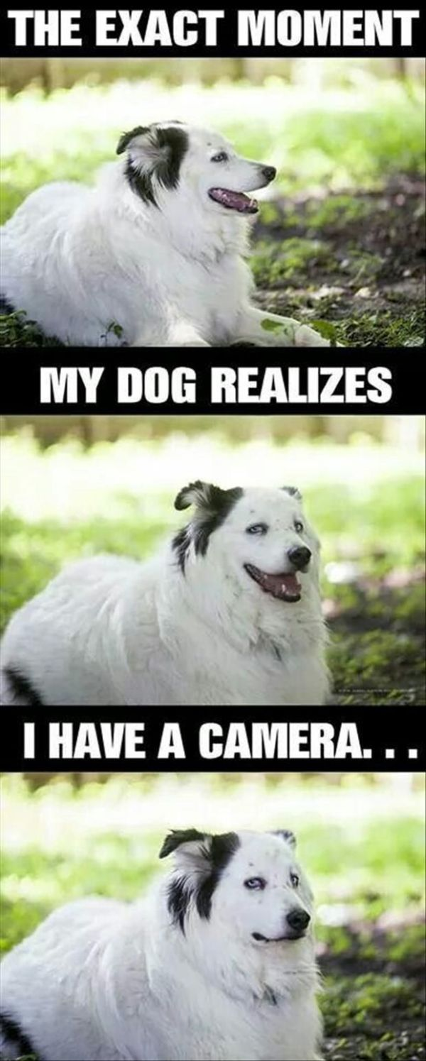 The Exact Moment My Dog Realizes I Have A Camera - Dog humor