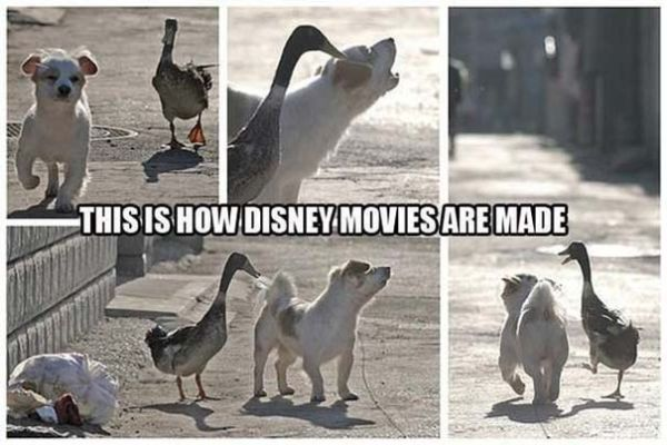 This Is How Disney Movies Are Maid - Dog humor
