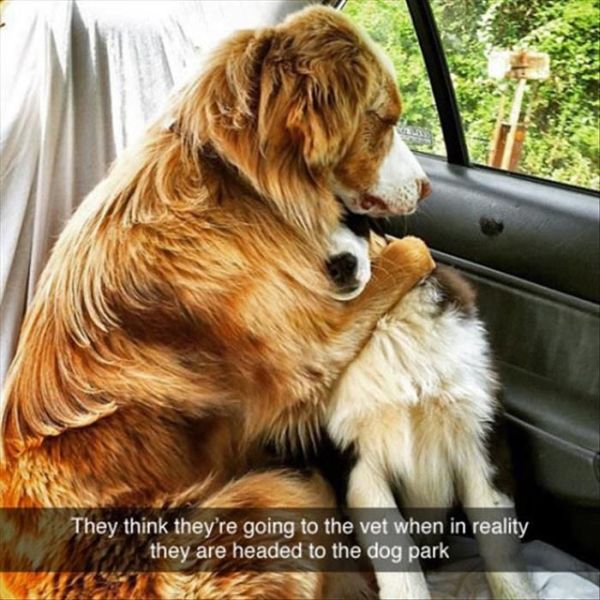 So Cute... - Dog humor