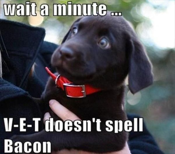 Wait A Minute - Dog humor