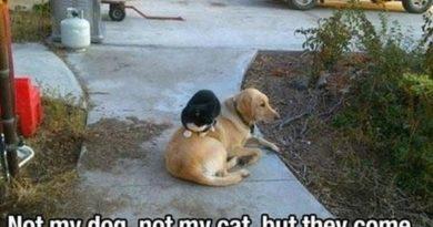 Weird Story - Dog humor