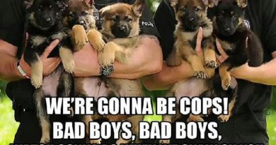 We're Gonna Be Cops - Dog humor