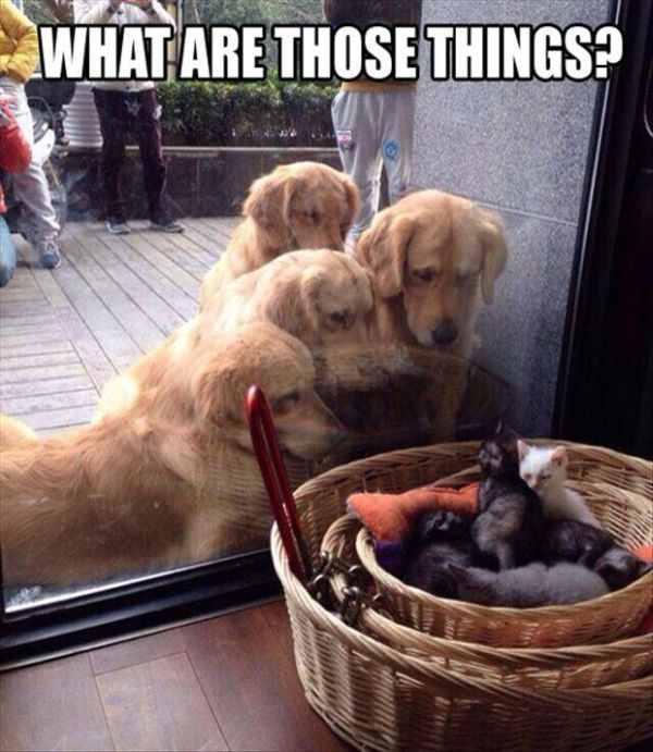 What Are Those Things? - Dog humor