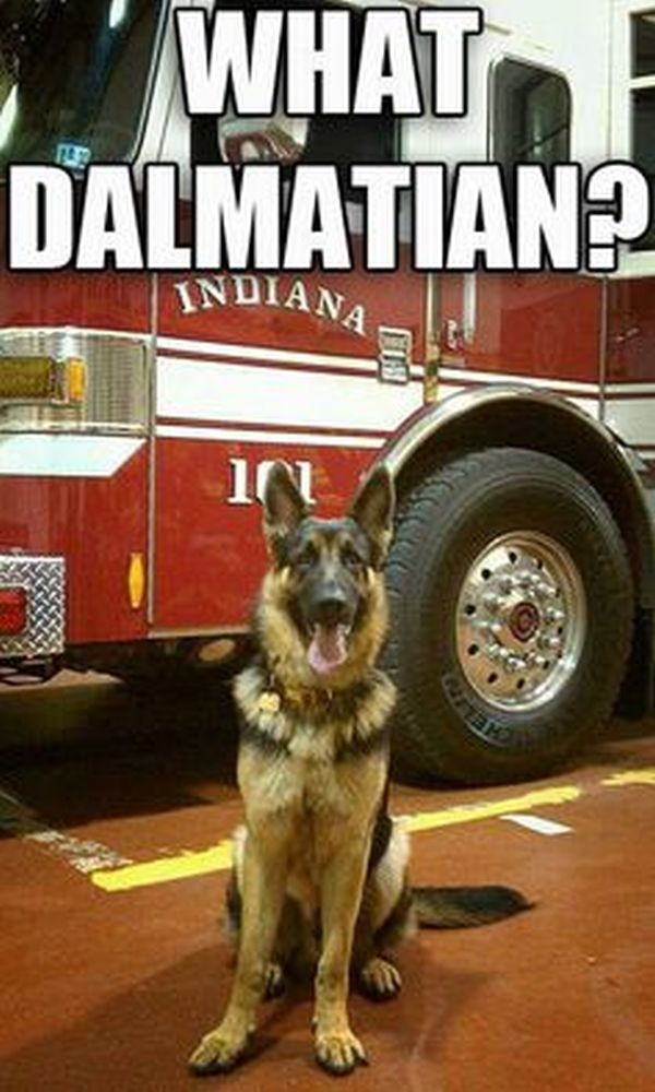 What Dalmatian? - Dog humor