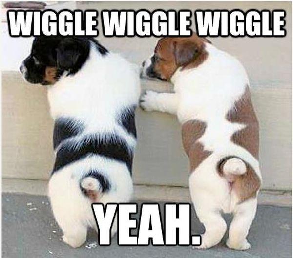 Wiggle, Wiggle, Wiggle - Dog humor