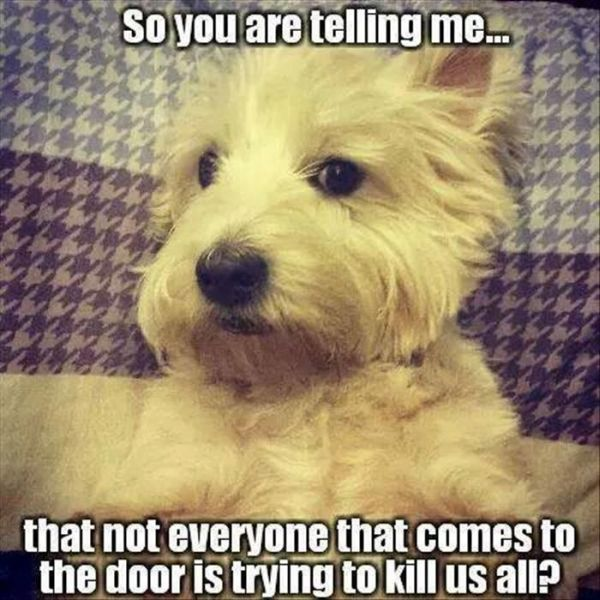 So You Are Telling Me... - Dog humor