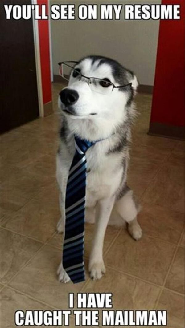 You'll See On My Resume - Dog humor