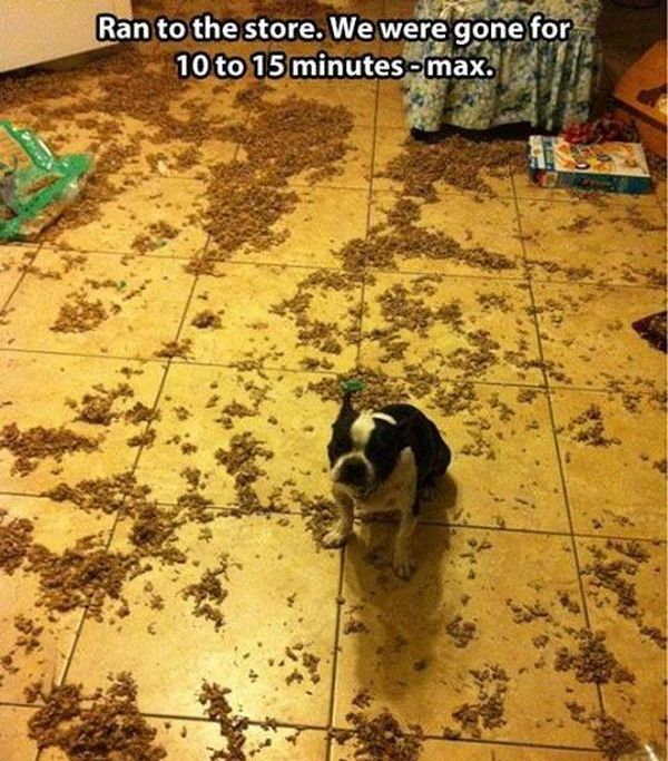 I Was Only Gone For Ten Minutes - Dog humor