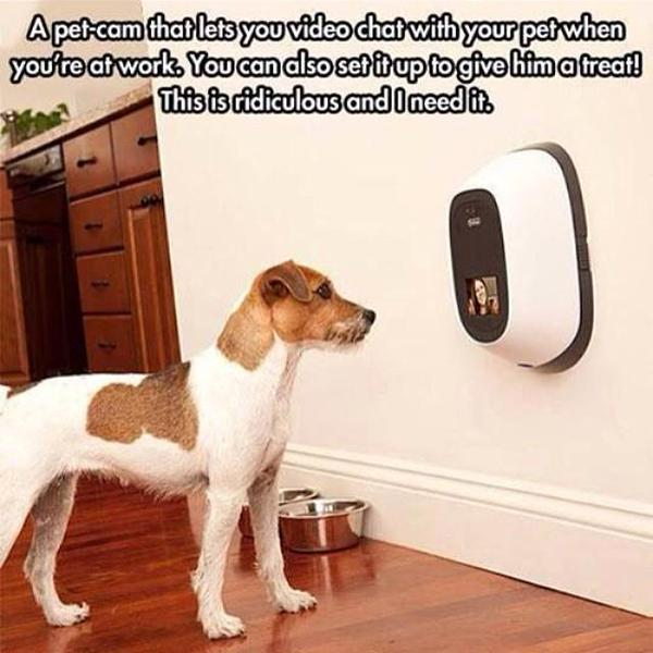 A Must Have Dog Gadget - Dog humor