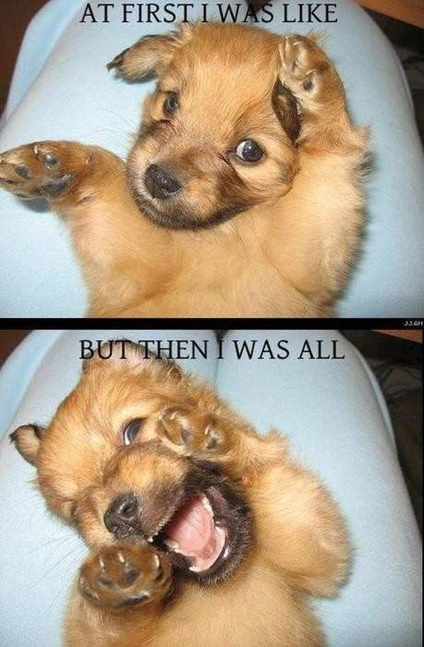 At First I Was Like... - Dog humor