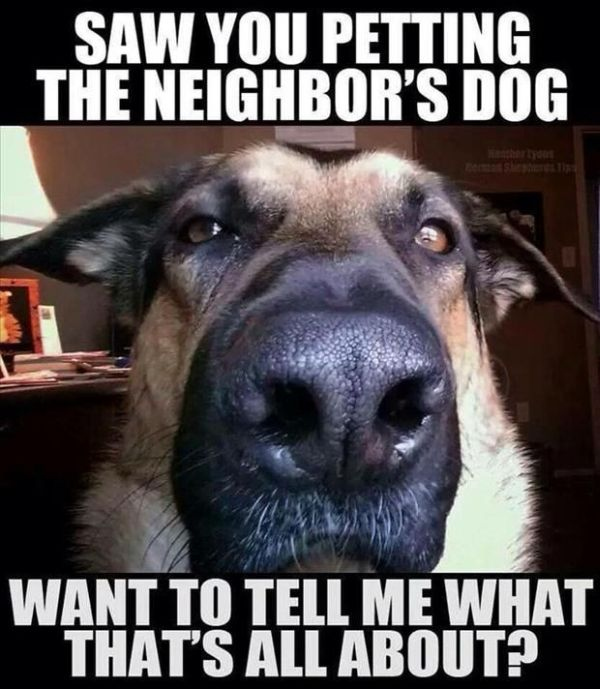 You Are Busted! - Dog humor