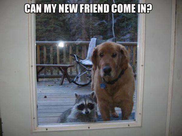 Meet My New Friend - Dog humor