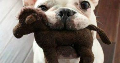 Can't Talk... - Dog humor