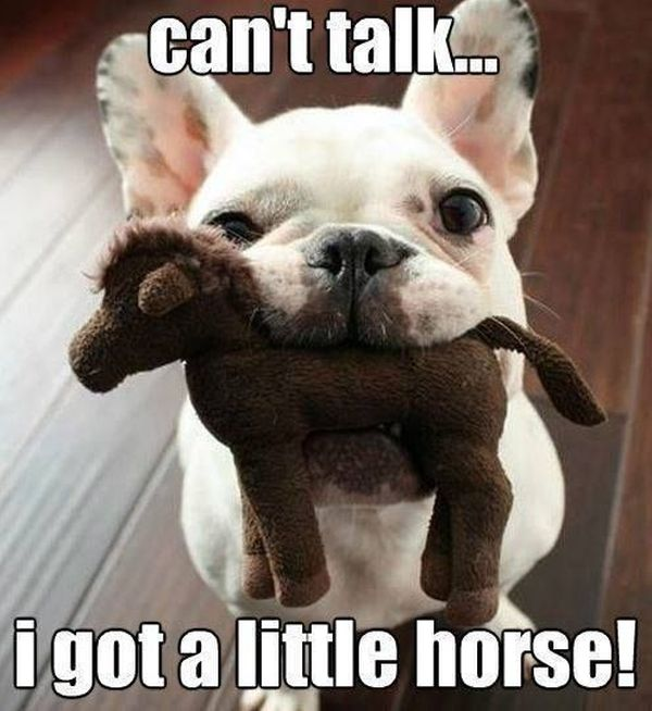 Can't Talk... - Dog humor
