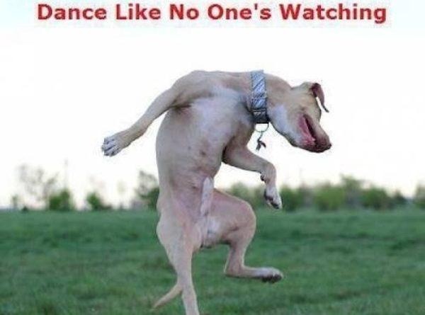Dance Like No One's Watching - Dog humor
