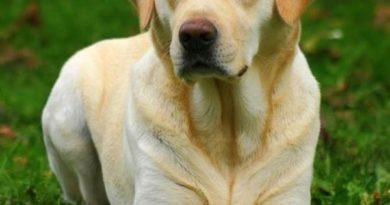 Dog Politics - Dog humor