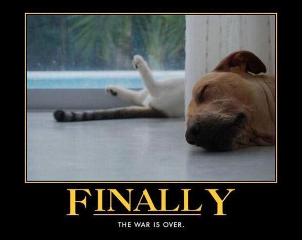 Finally - Dog humor