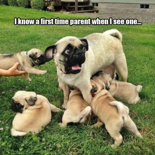 First Time Parent - Dog humor