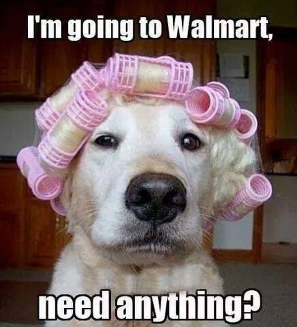 I'm Going To Walmart - Dog humor