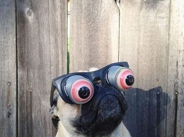 Googly Eyes - Dog humor