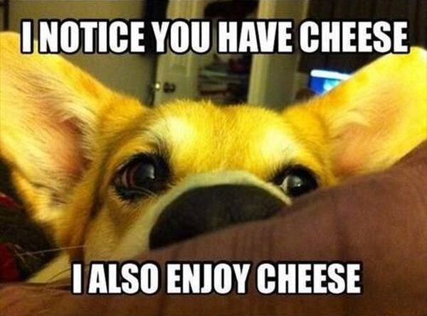 I Notice You Have Cheese - Dog humor