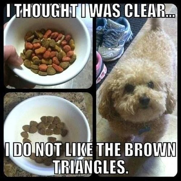 I Thought I Was Clear... - Dog humor