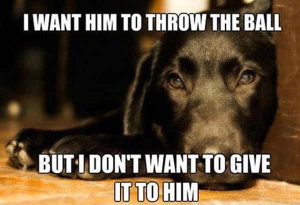 I Want Him To Throw The Ball - Dog humor