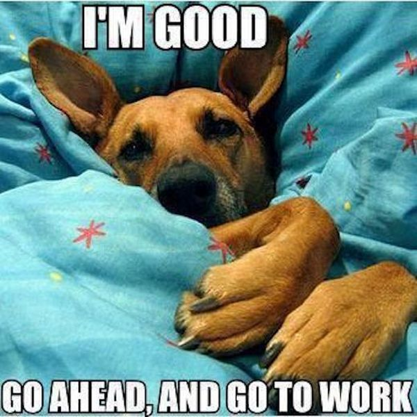 I'm Good... - Dog humor