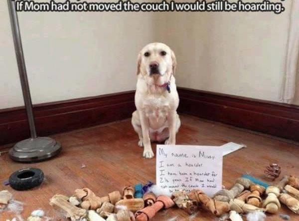I'm A Hoarder - Dog humor