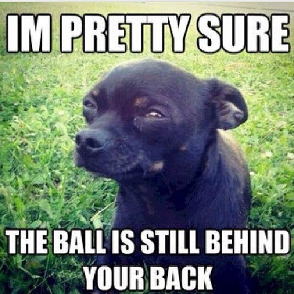 I'm Pretty Sure - Dog humor