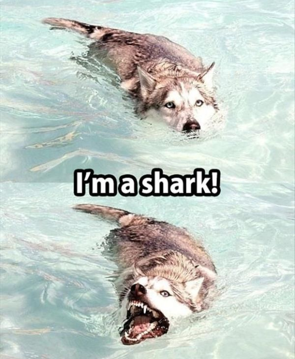 I'm A Shark - Dog humor