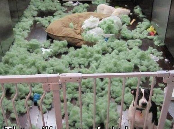 I'm So Glad You're Back... - Dog humor