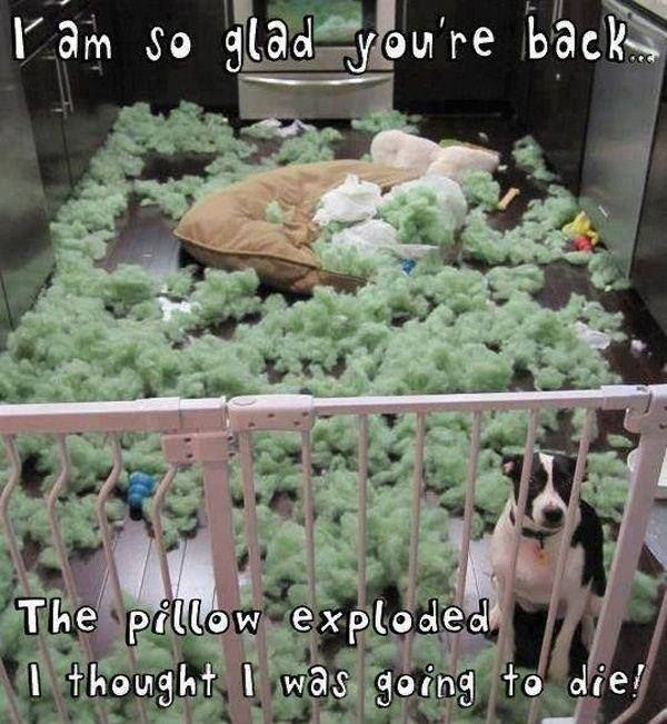 I'm So Glad You're Back... - Dog humor