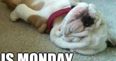 Is Monday Over Yet? - Dog humor