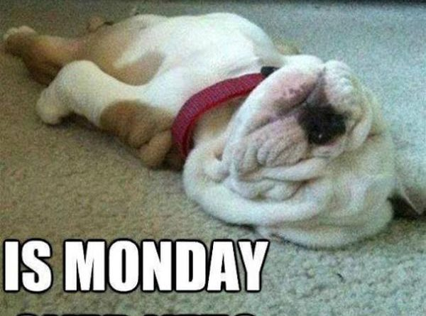 Is Monday Over Yet? - Dog humor