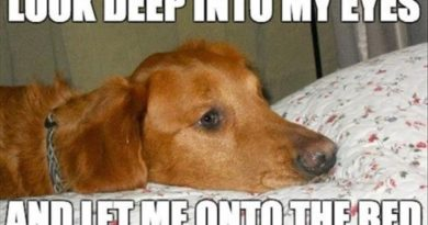 Look Deep Into My Eyes - Dog humor